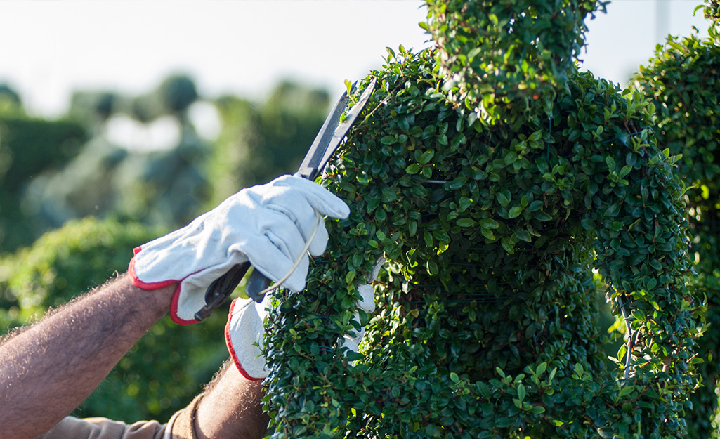 How To Make A Topiary The Home Depot