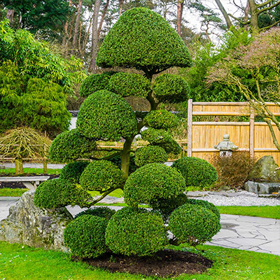 A topiary in a yard