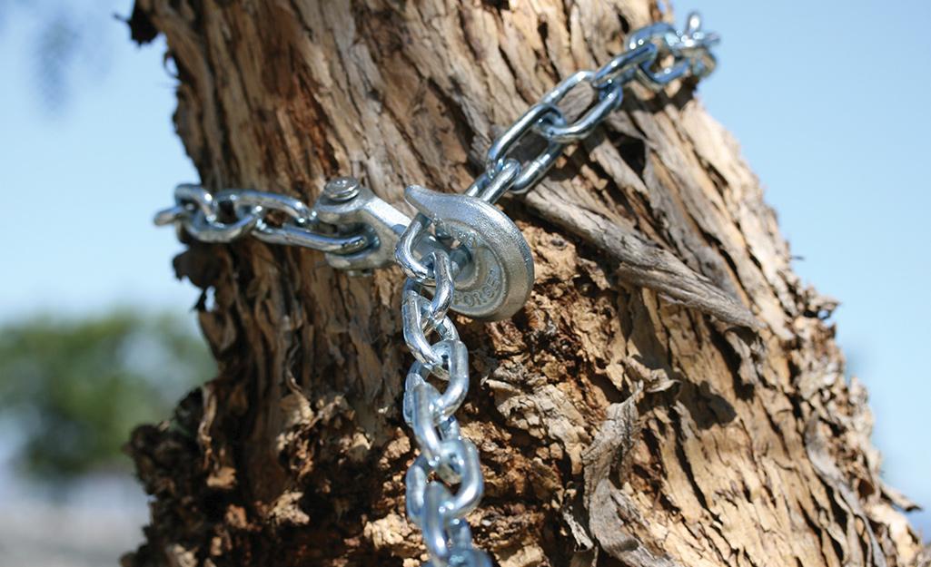 Dây xích buộc quanh cành cây để làm cây đu đưa.