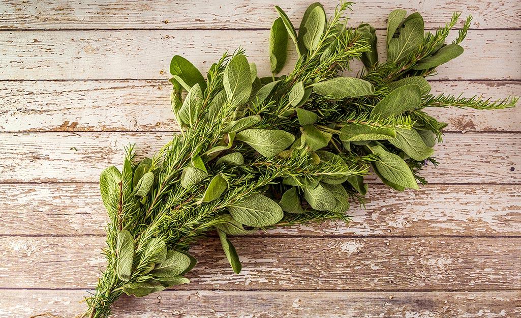 Lots of herb bundles tied together.