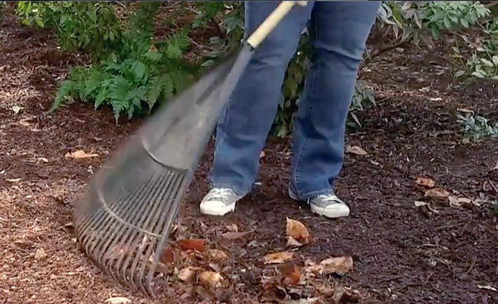Gardener rakes area for garden