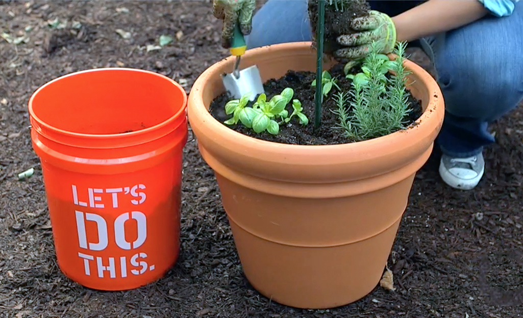 Soil and herbs in terra cotta container