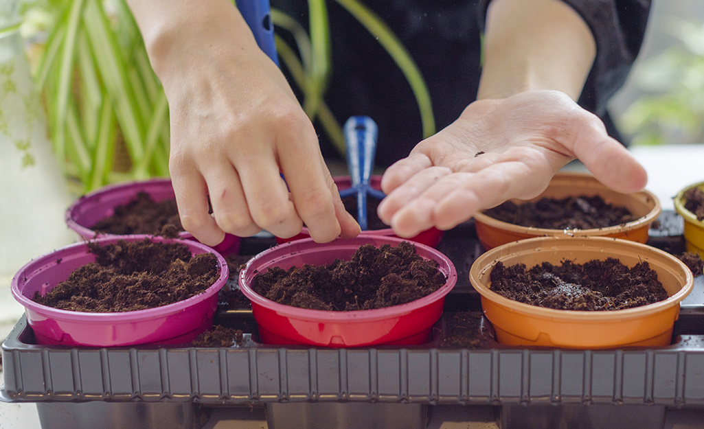 Someone planting herb seeds in six different colored pots.