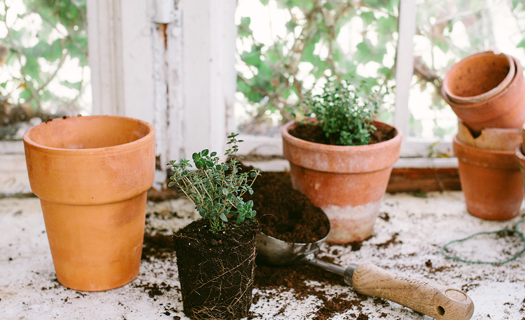 A garden trowel filled with potting mix, an unpotted herb plant and several terra cotta pots sitting beside a window.