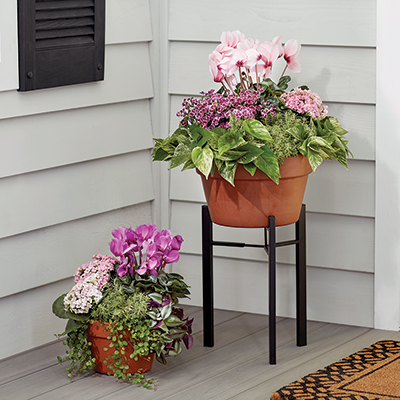 Pink flowers and green foliage in terra cotta containers