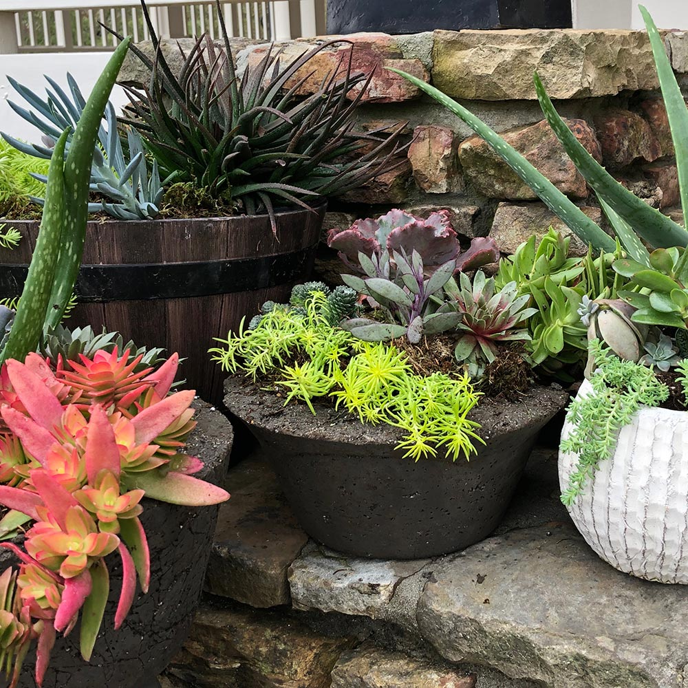 Succulents in rustic hypertufa containers.