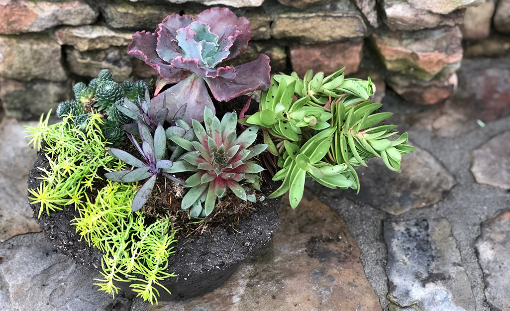 A variety of succulents in a hypertufa container.