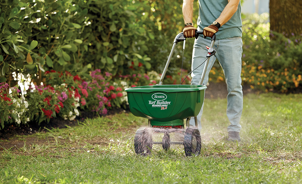 Sow seeds - How to Patch a Lawn with Seed