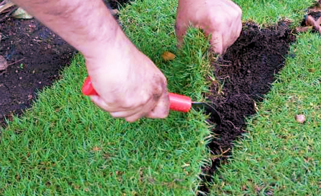 Patch with sod - How to Patch a Lawn with Seed