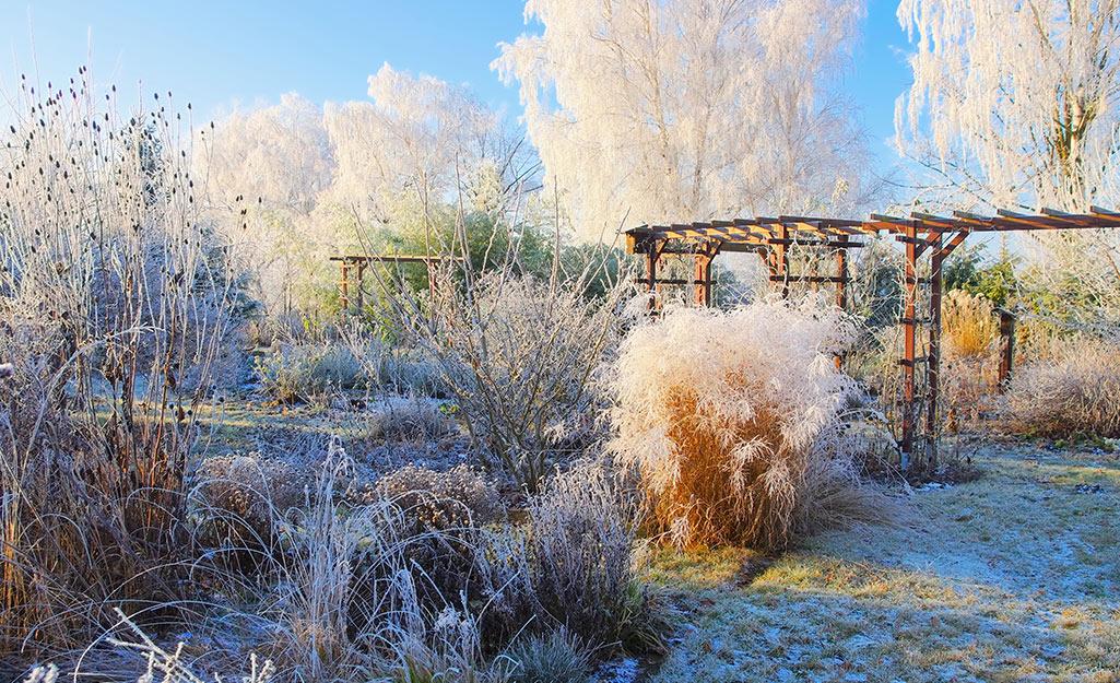 Observe Plants Across All Seasons