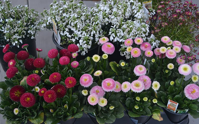 Select Flowers for Your Window Box