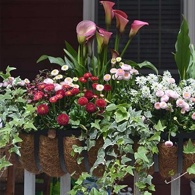 How to Plant a Colorful Window Box