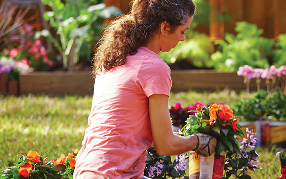 Choose your plants - How To Plant Flowers