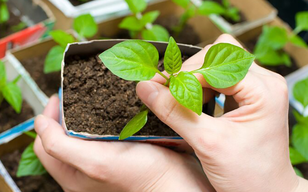A person holding a small potted plant.