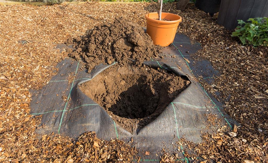 A hole prepared to plant a tree