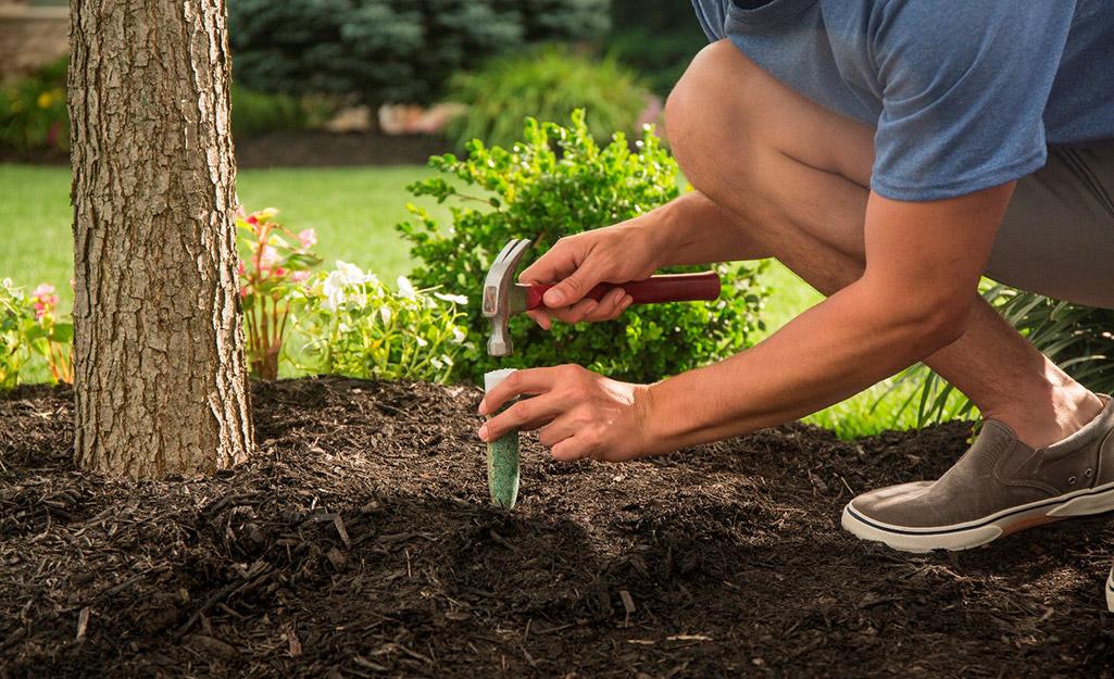A gardener fertilizing a tree