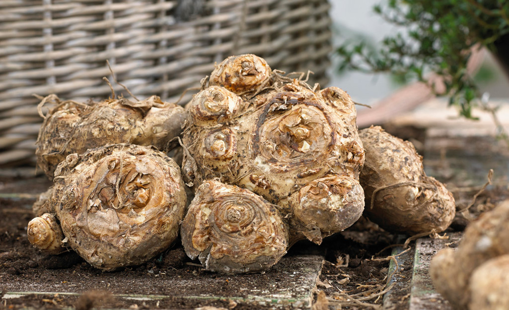 Planting conditions - Plant Summer-Flowering Bulbs