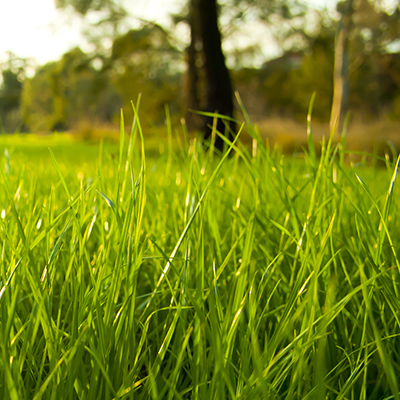 How to Prep for the Lawn of Your Dreams