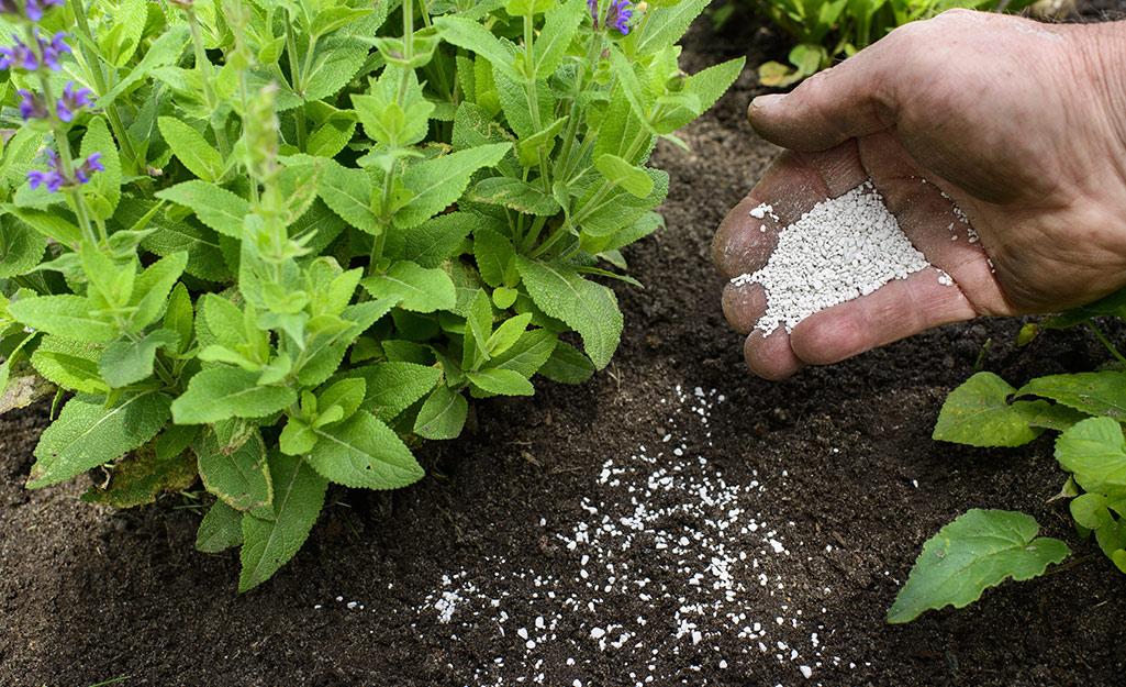 Gardener fertilizing plants