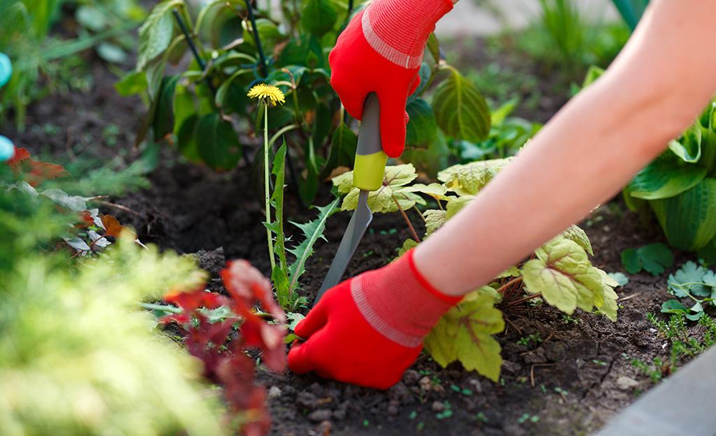 Gardener pulling weeds