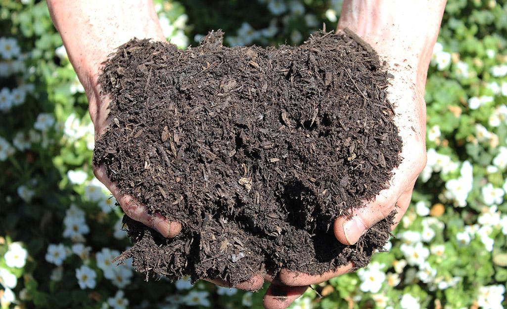 Test Soil, Add Nutrients