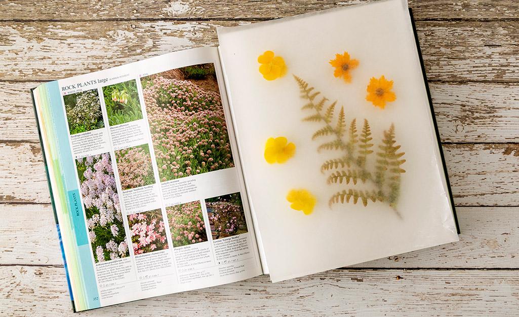 Một cuốn sách với những bông hoa tươi trên một trang.
