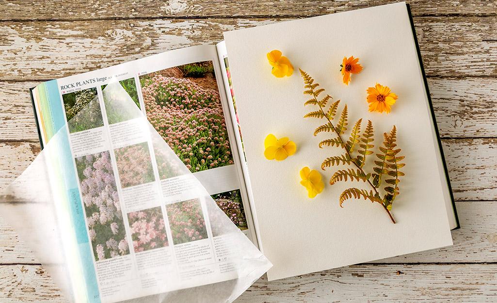 Một cuốn sách mở với những bông hoa đặt trên một tờ giấy.