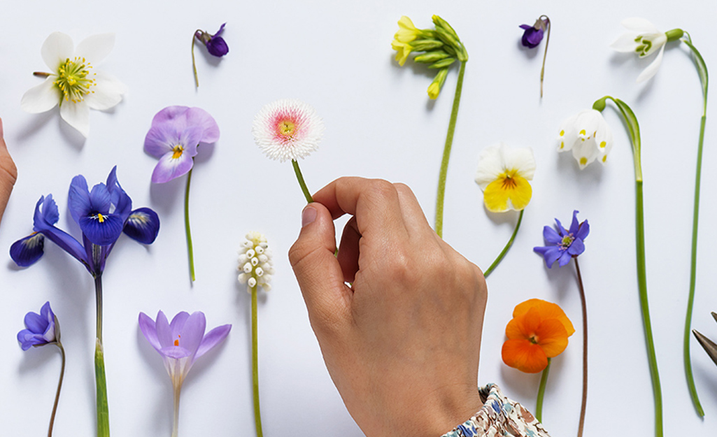 Một người đặt hoa trên bàn.