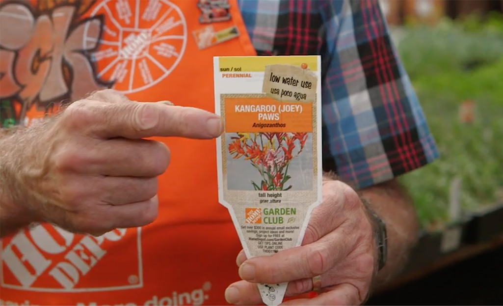 A Home Depot employee points at a plant tag.