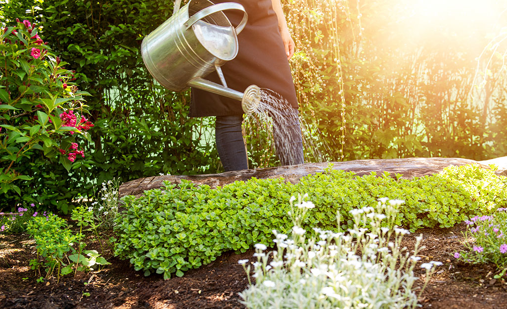 A person uses a watering can to water their garden.
