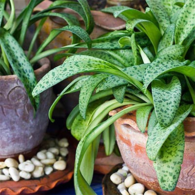 How to Read Your Houseplants