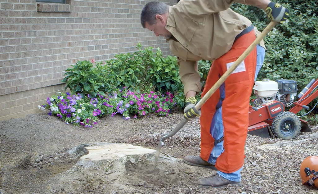 A man wearing protective orange pants uses a shovel to clear the area around a tree stump next to a brown brick house.