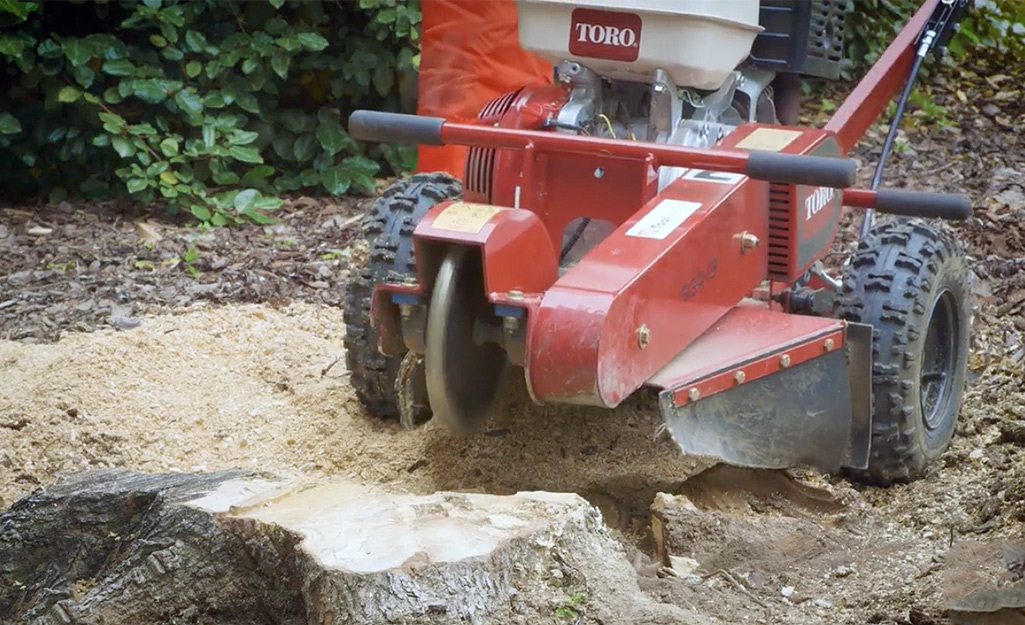 A red tree stump grinder chops the wood of a stump into small pieces of debris.