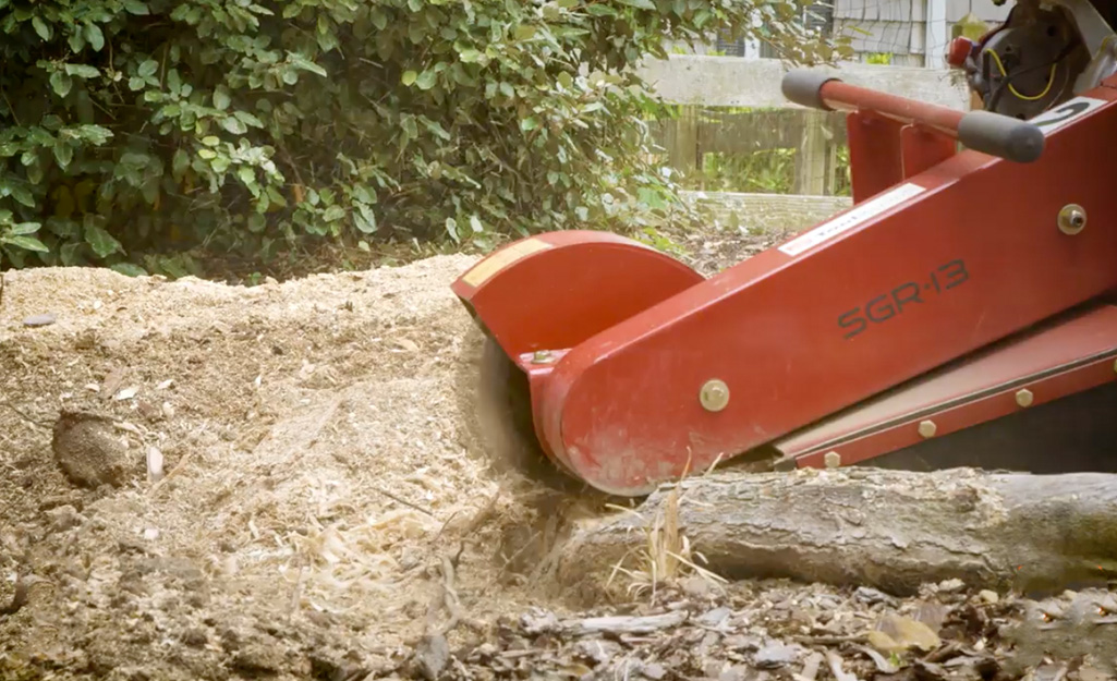 A red tree stump grinder cuts through the roots of a tree stump being removed from a yard.