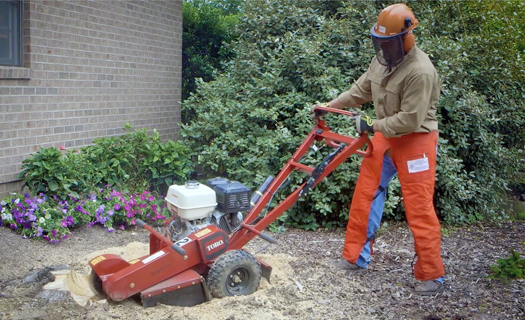 A man wearing protective gear uses a tree stump grinder to remove a stump next to a brown brick house.