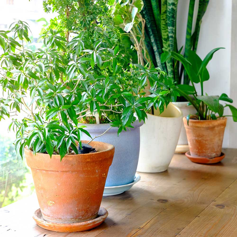 How to Revive a Dying Houseplant - The Home Depot