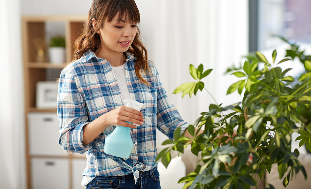 A woman misting a houseplant with water from a spray bottle.
