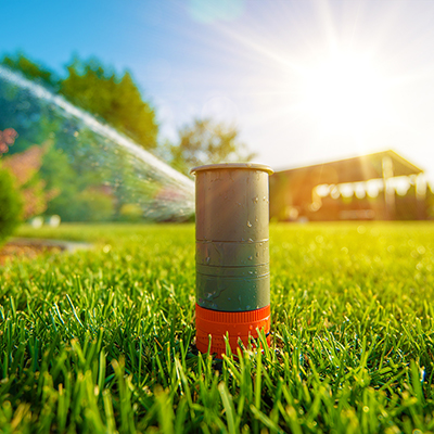 Easy Ways to Save Water in Your Garden