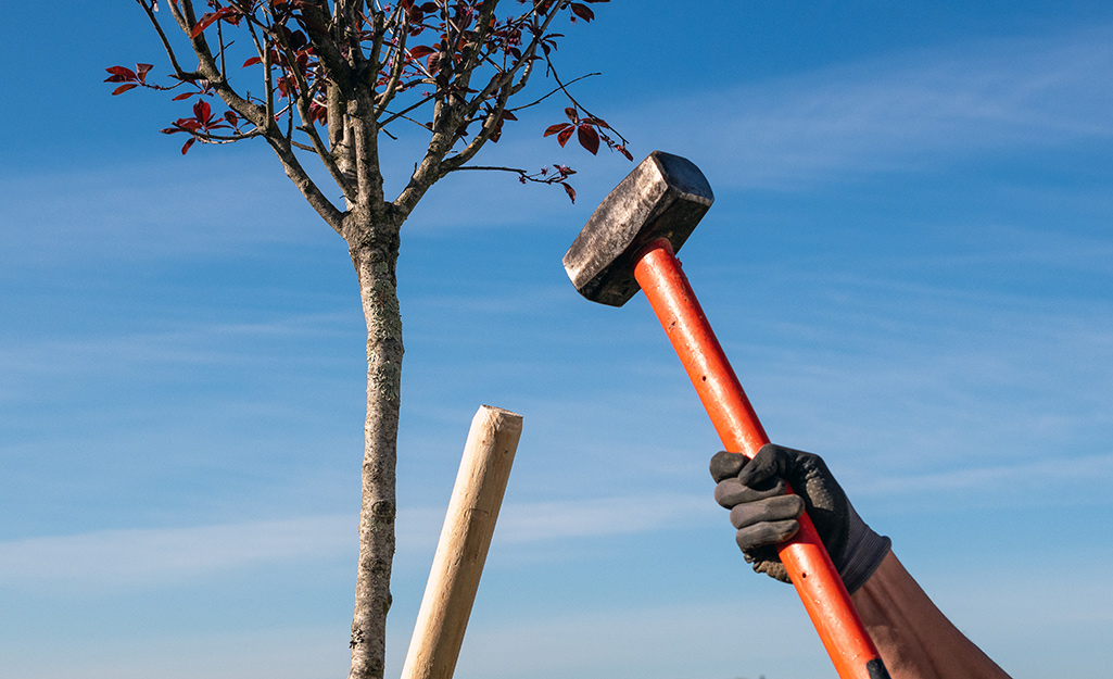 A person hammering a stake next to a tree.