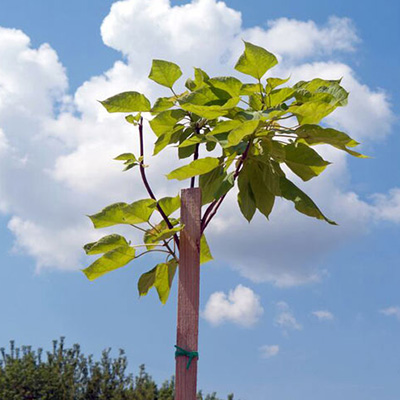 Stake a Tree