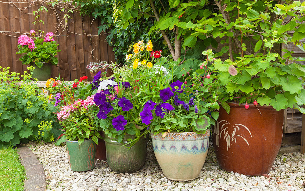 A collection of potted plants sitting on gravel.