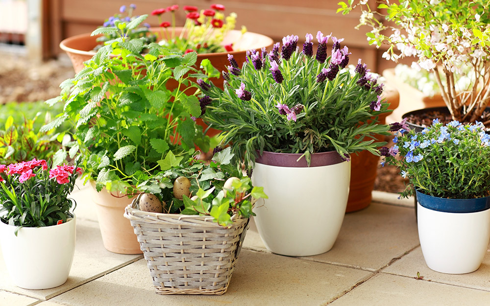 A collection of potted plants on a patio.