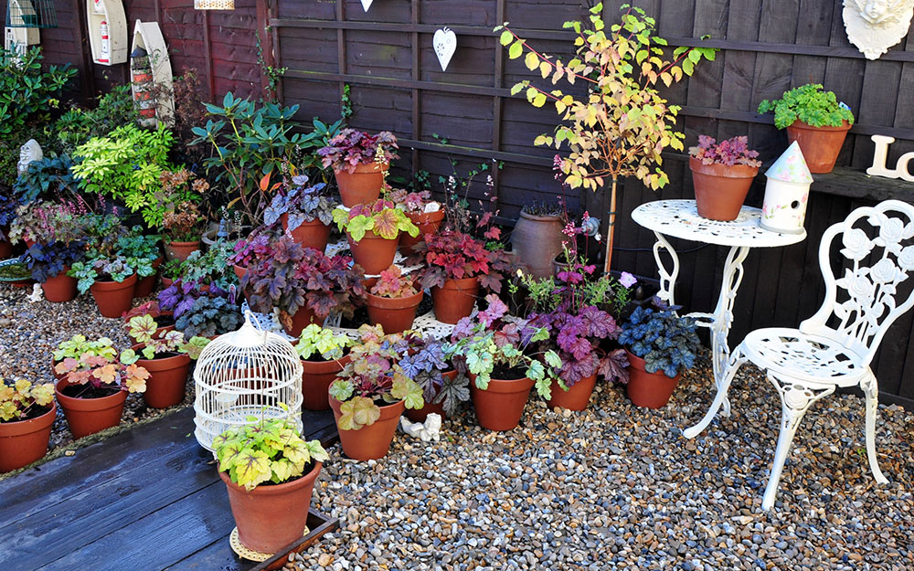 A collection of potted plants on a gravel patio.