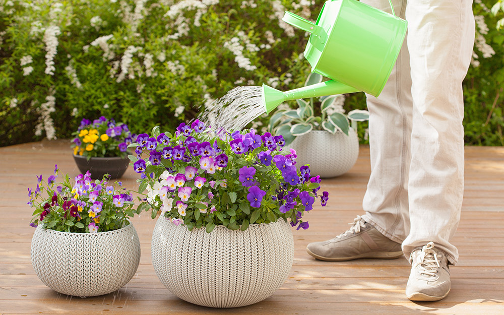 A person watering potted plants.
