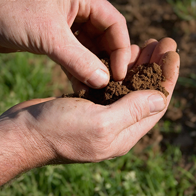 A person holding garden soil in their hand.