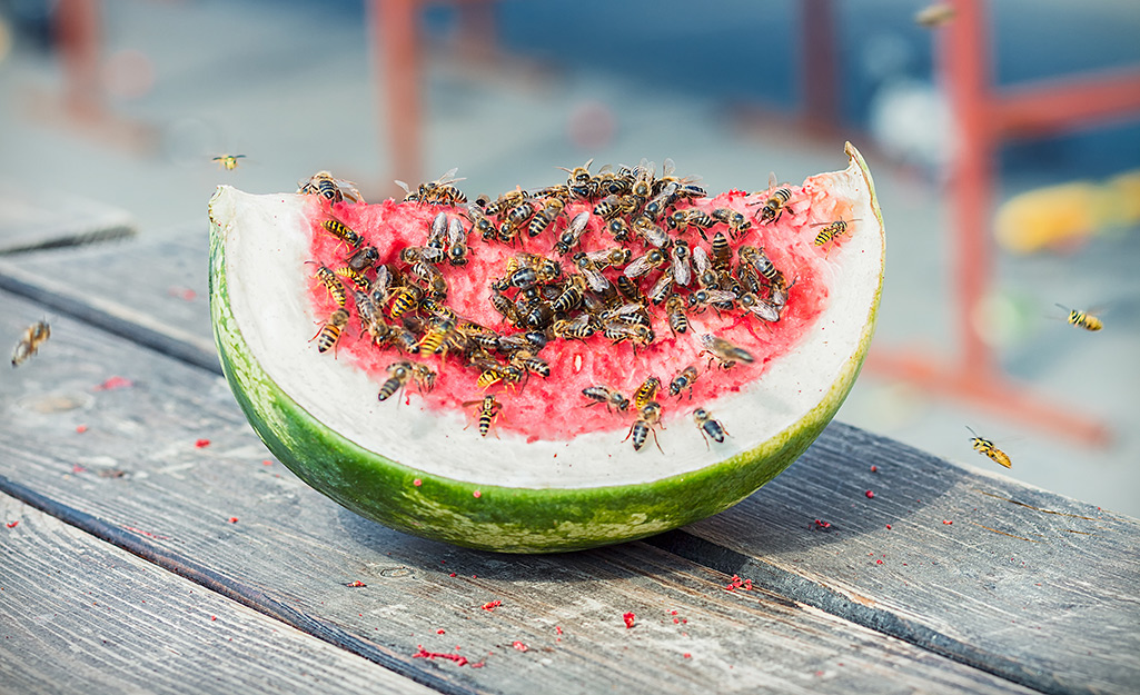 Bees swarm over a piece of watermelon on an outdoor table,