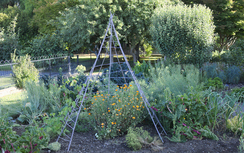 a garden trellis surrounded by lots of plants