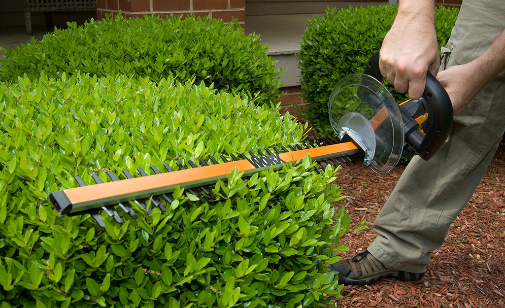 step 3 - how to trim overgrown hedges
