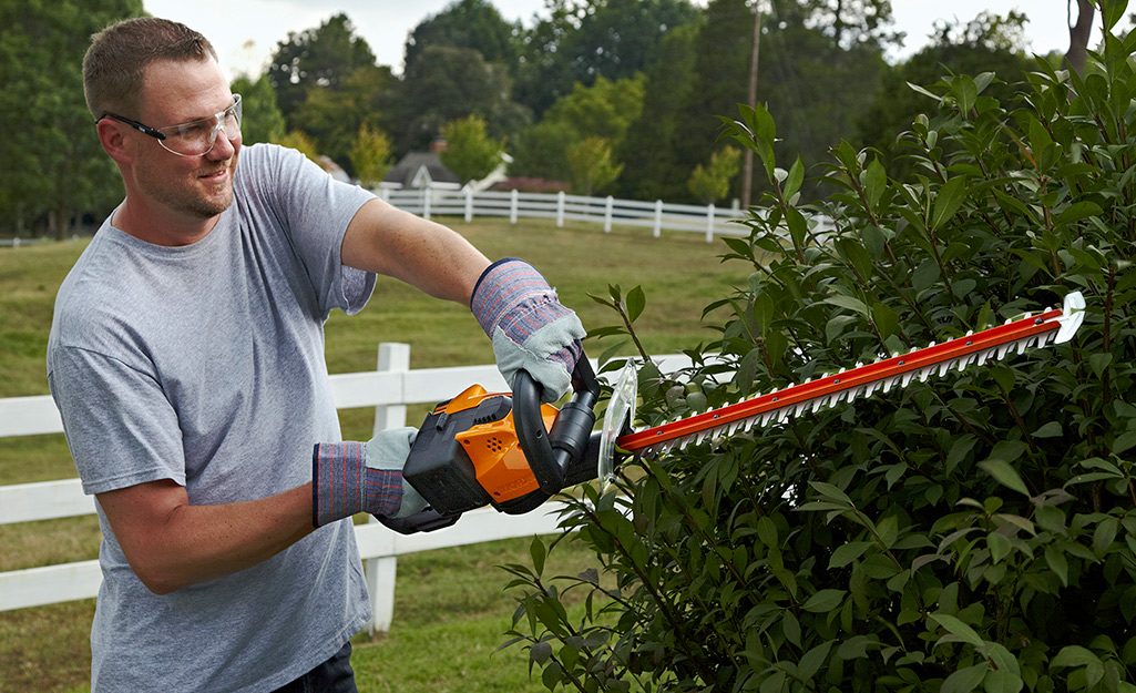 step 4 - hedge trimming tips