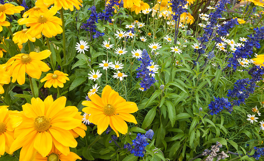 Yellow and purple flowers in a garden